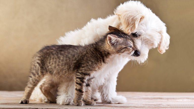 Ottieni un Preventivo Assicurazione Cane o Gatto - Giuriolo & Pandolfo Assicuratori